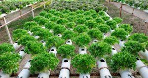cara memanfaatkan lahan sempit kota untuk berkebun