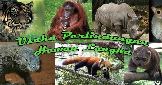 upaya konservasi satwa langka di Indonesia